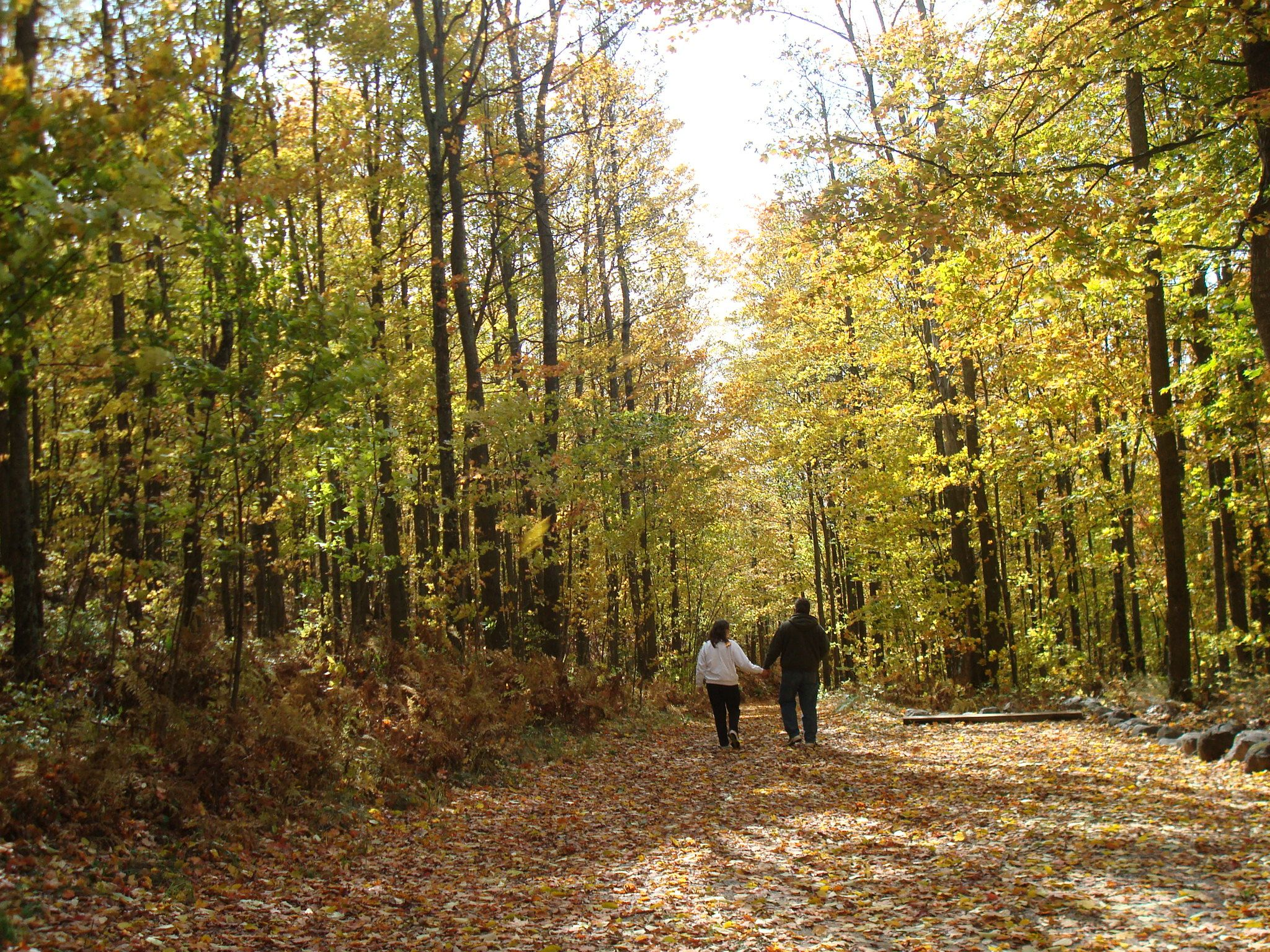 kettle moraine state forest fall