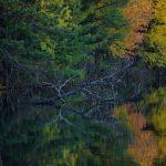 Mcgrath Lake Oneida County