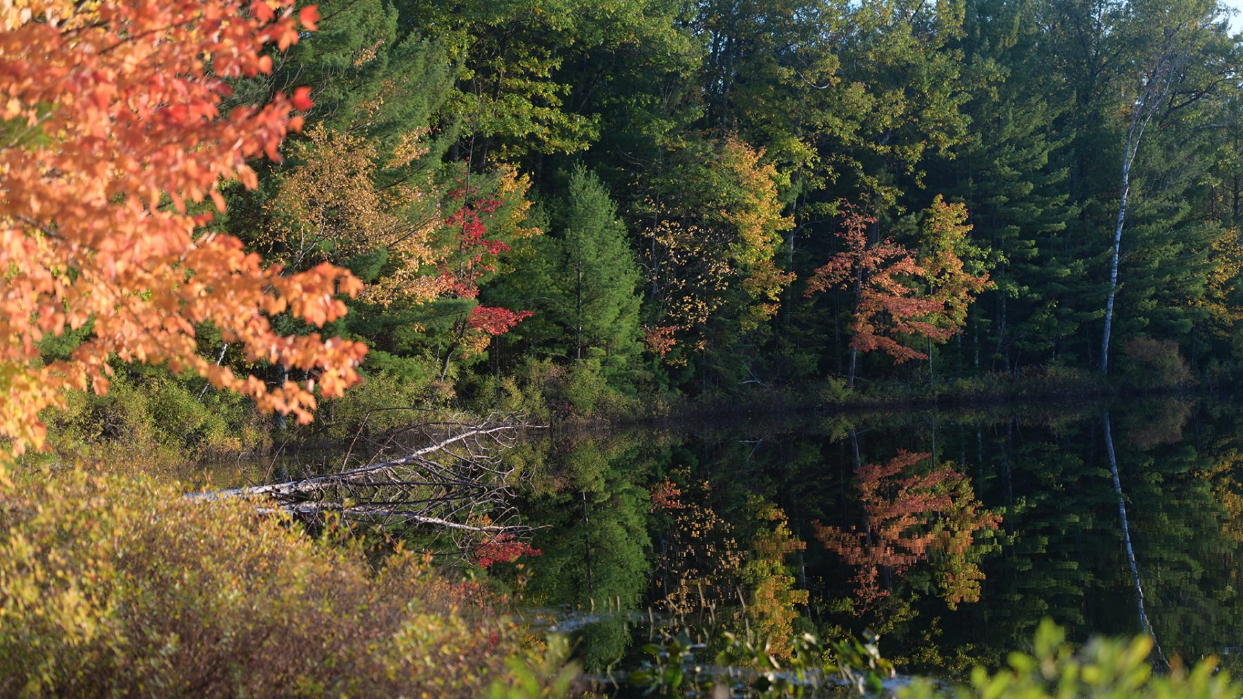 Fall colors in Northern Highland American Legion State Forest
