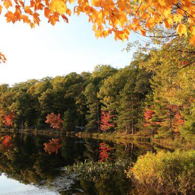 fall color oneida county wi