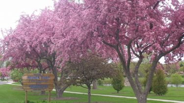 Wisconsin spring flowers