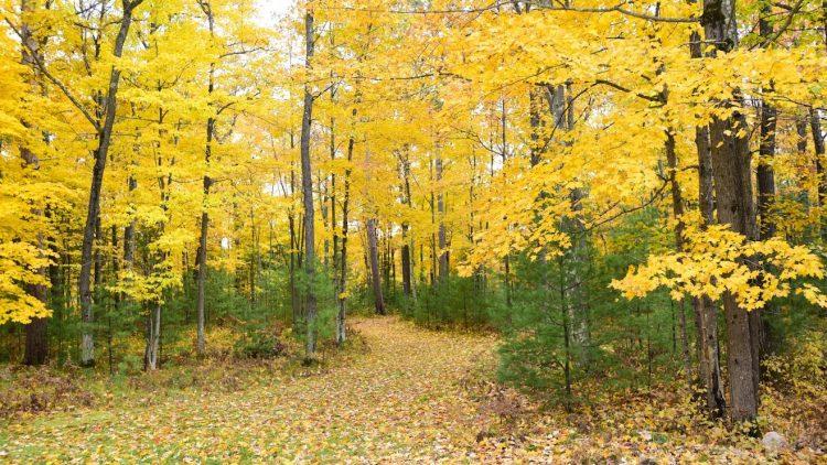 fall color oneida county wisconsin